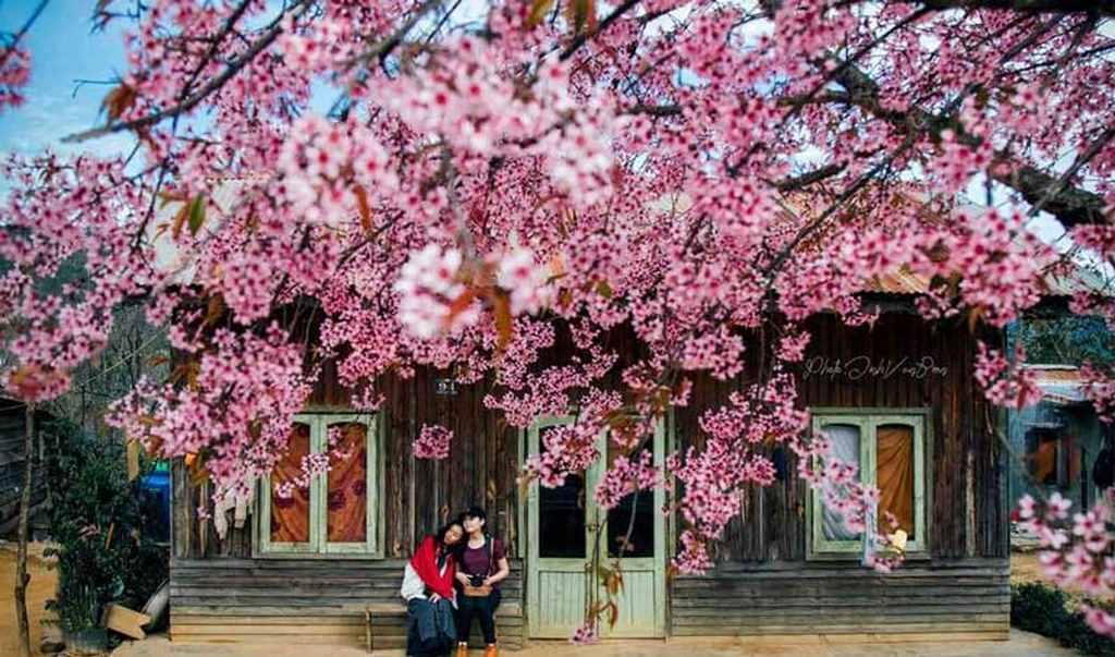 du lịch Đà Lạt mùa nào đẹp